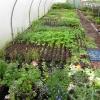 propagation-tunnel-seedlings