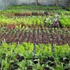 seedlings-in-potting-tunnel-jpg-lings