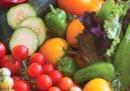vegetable-seedlings