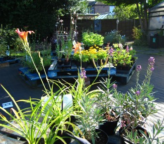Herbaceous Perennials in summer