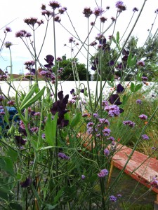 View point with verbena and sweet peas