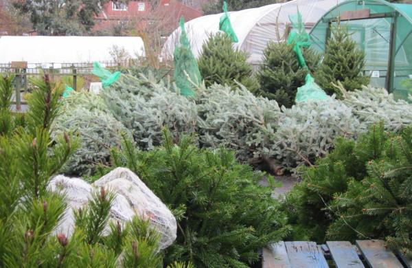 Trees on 9th Dec.