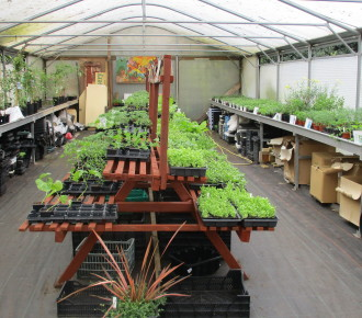 Vegetable seedlings and bedding plants