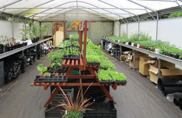 Vegetable seedlings and bedding plants