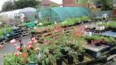 Spring bulbs and herbaceous perennials