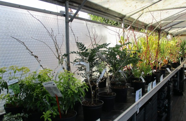Evergreen & Winter interest shrubs