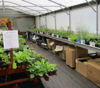 Bedding plants and Vegetable seedlings