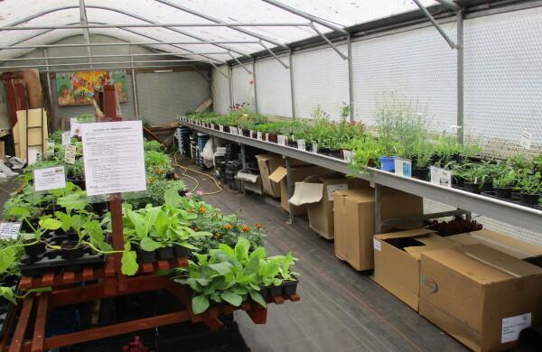 Bedding plants and Vegetable seedlings